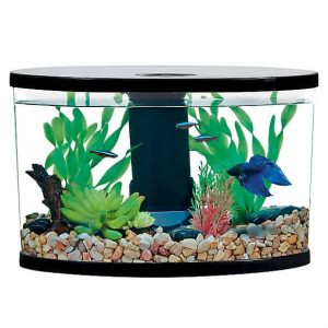 2 Gallon Fish Tank – What You Must Know!