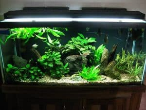 75 Gallon Tank – Everything You Must Know